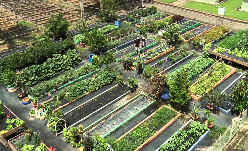 Huertos Urbanos Además De Brindar Beneficios Terapéuticos Y