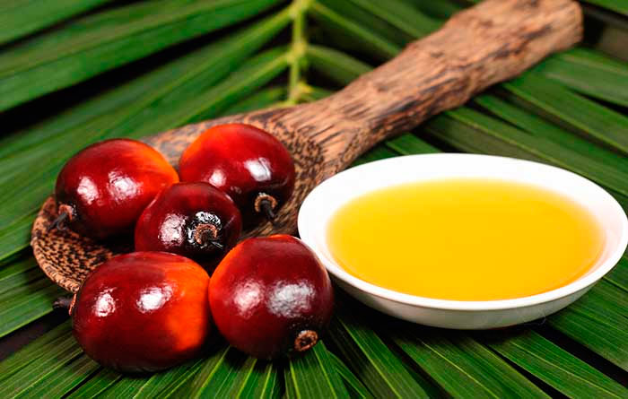 cual es el aceite de palma