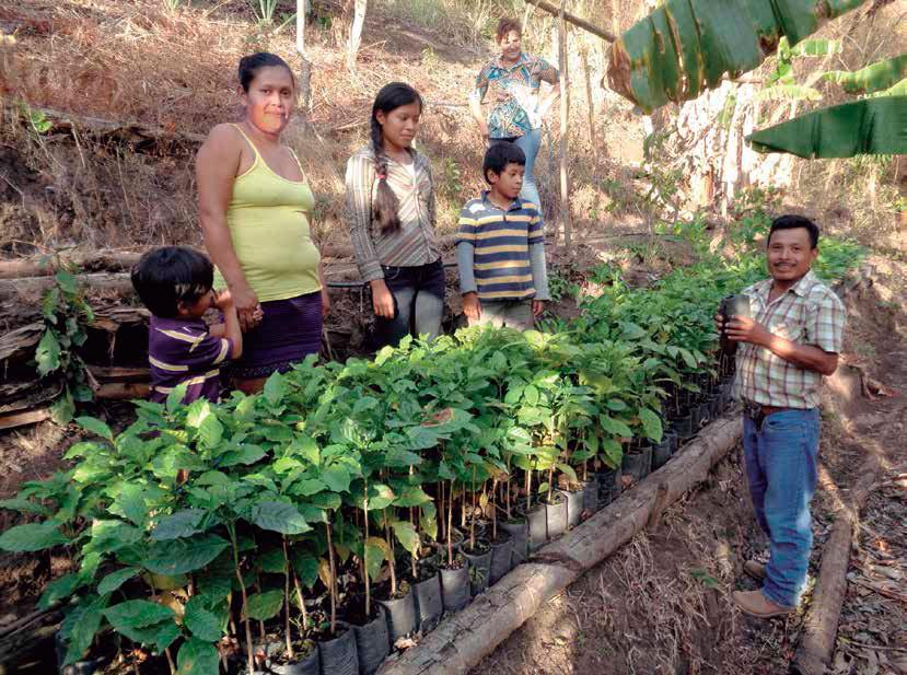 Producción de plantones de la familia de Hilario Polanco. Simas