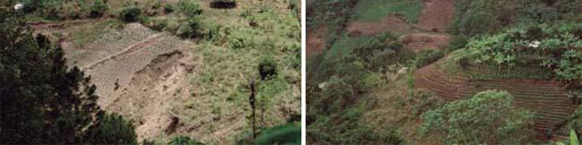 Después del huracán Mitch en Honduras: derrumbes en campos con monocultivos (izquierda) y resiliencia de los sistemas diversificados bajo agroforestería y cultivos de cobertura (derecha) M. Altieri
