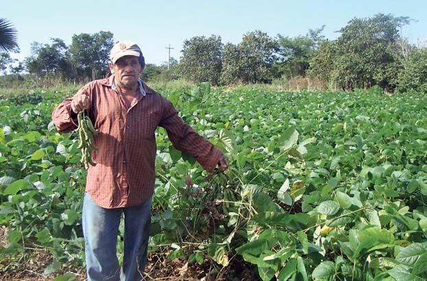 Contribuci n de las leguminosas en la agroecolog a y for Sembrar maiz y frijol juntos