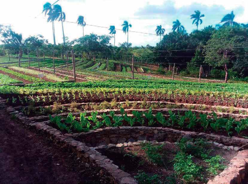 Balance Entre Tecnología Agroecológica Y Agroecología